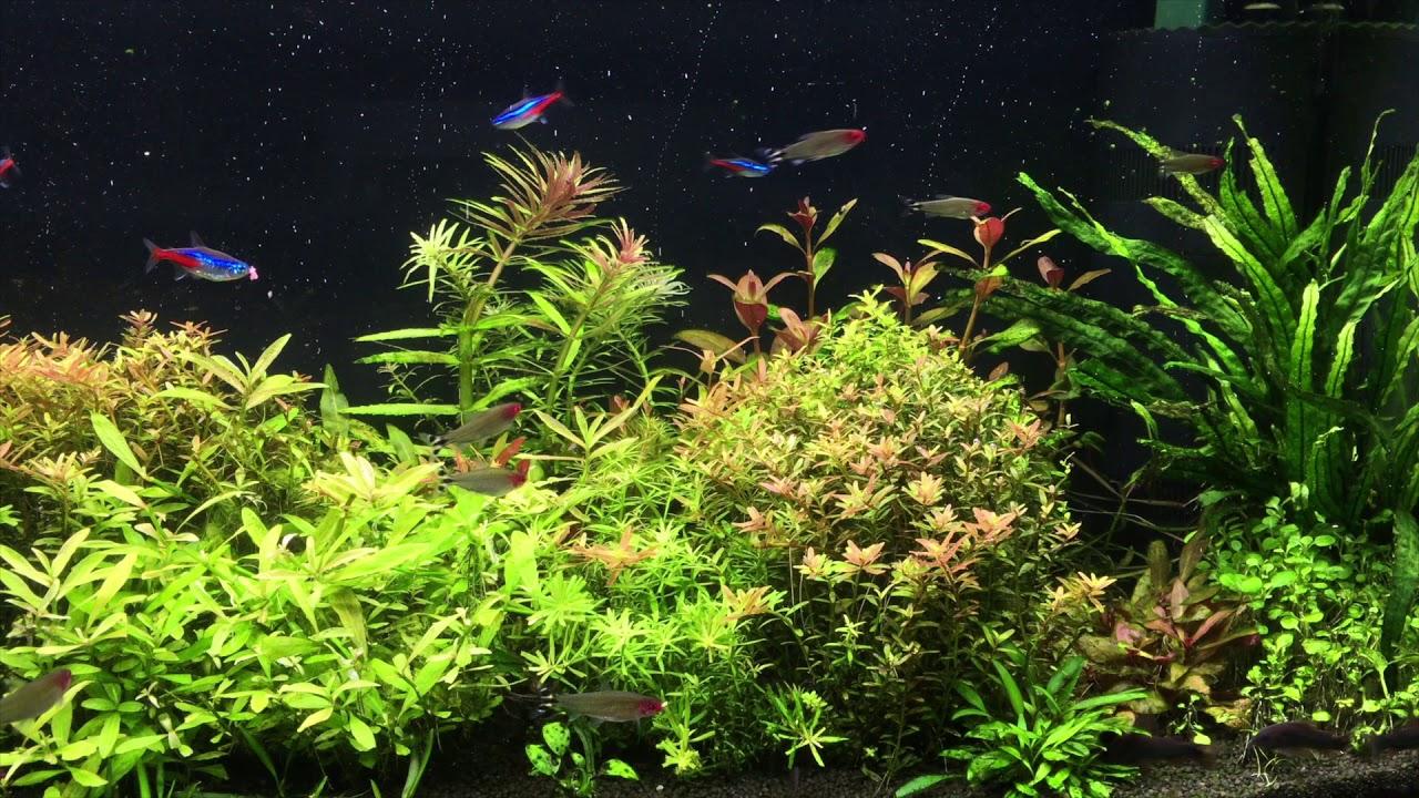 108 Oświetlenie Chihiros A801 Aquael Leddy Slim 80 Plant Porównanie