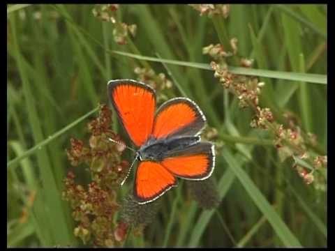 Schmetterlinge -- kleine Wunder der Natur