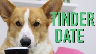 DOGS ON TINDER - Topi the Corgi