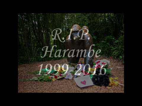 Harambe Tribute