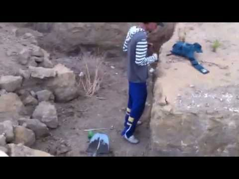 place of fossils mosasaurs in ouedzem...