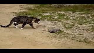 Funny Cats V S Snakes Compilation