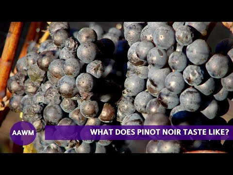 wine article What does Pinot Noir taste like