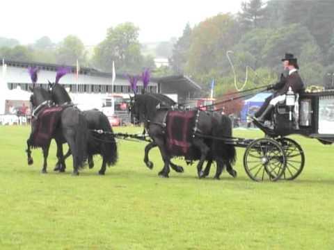 Bakewell Show 2011 horse drawn hearse class winner