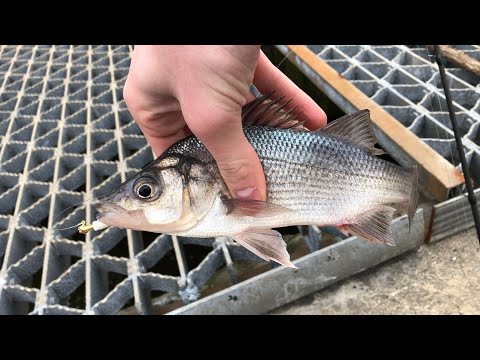 Core Creek Park | Lake Luxembourg Fishing - Perch And Bass