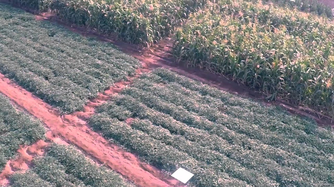Celebrating Science and Innovation in Agriculture - Farming First