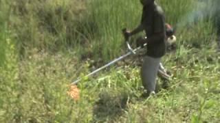 rice cutter brush cutter reaper harvester crop cutter rajkumar agro engineers pvt ltd india