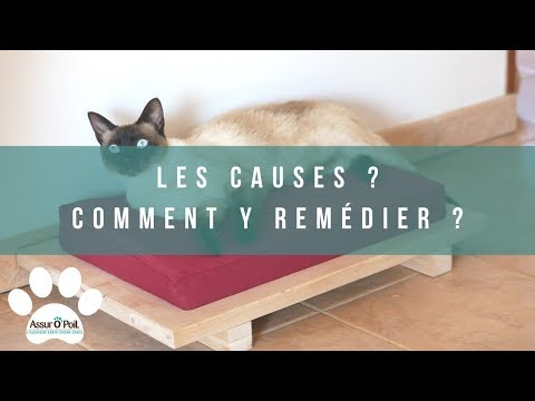 Pourquoi Mon Chat Miaule La Nuit ?    Assur O'Poil
