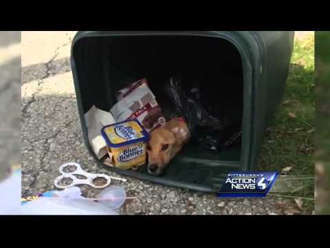 Woman 'Discards' Dog in Trash Can, Then Moves to Another State to Be With Boyfriend
