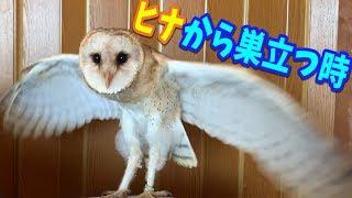 たのしいぺっとしょっぷ【あにまるず】OPEN! http://ams1222.jp/ サブ...