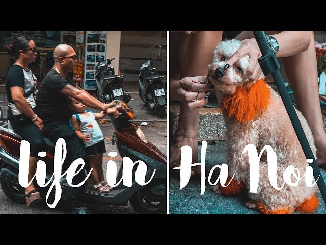 VLOG 72 - LIFE IN HA NOI
