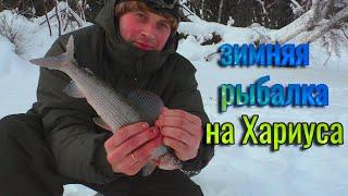 Зимняя рыбалка на ХАРИУСА Рыбалка в Коми на таёжной реке Два хариуса на одну удочку рыбалка удалась