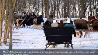 Sleigh Rides at The Farm at Walnut Creek