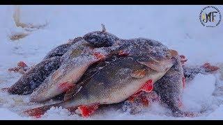Великий окунь взимку на блешню і балансир. Супер риболовля 2018 .Озеро Ільмень.
