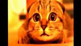 Смешные ролики с животными-Лучшие приколы с участием кошек и собак, хохма, юмор, прикол