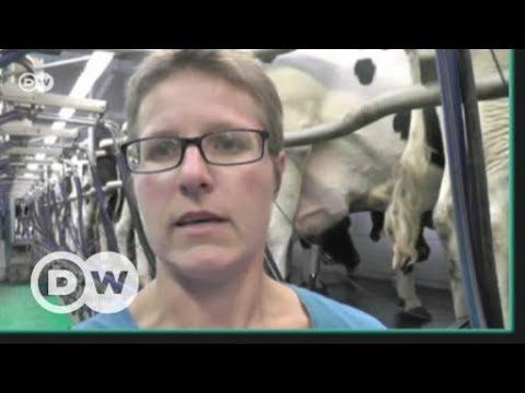 Farmyard or factory farms? | DW English