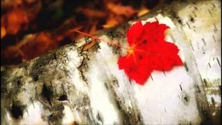 Van Morrison -  When The Leaves Come Falling Down