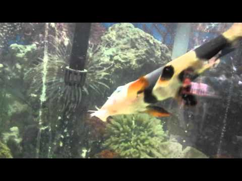 Blind Fish Gets Help Finding Food