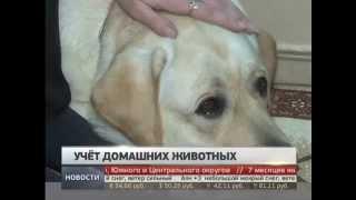Новые правила содержания домашних животных. Новости. Gubernia TV