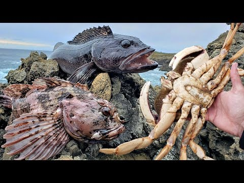 Eating MASSIVE CRAB And WORMY, PARASITIC FISH!  Catch And Cook!!