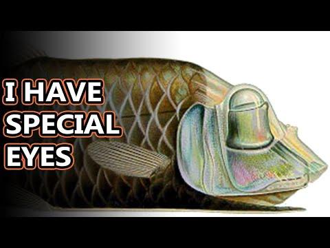 Barreleye Facts: The Dome-headed Deep Sea Fish   Animal Fact Files