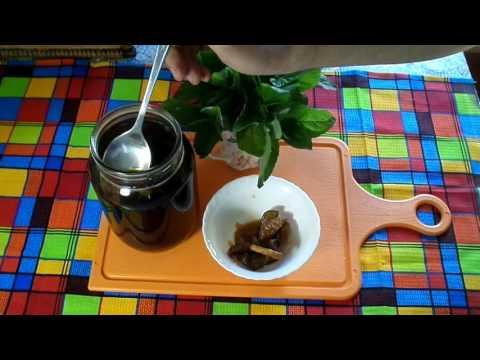 Чайный гриб - история происхождения