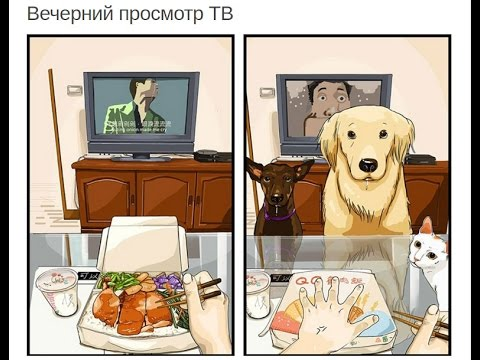 Как меняется жизнь после появления собаки. Мир глазами собак.