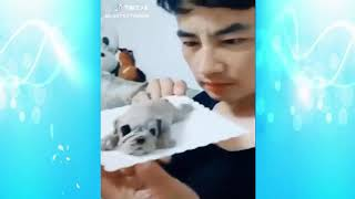 Funny kittens and Cats Meowing Compilation Cat Meowing Video -  Try Not To Laugh Challenge