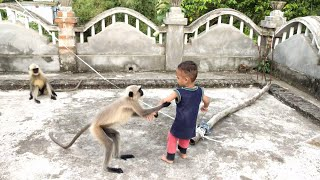 Baby langoors playing with children and create very funny moments.