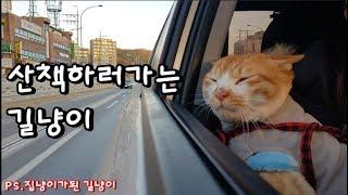 길냥이출신 고양이 산책 잘 할 수 있을까? (CAT & DOG 6화)