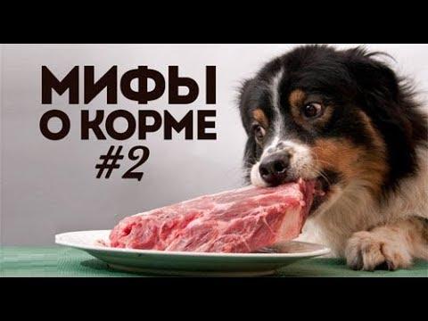 Сухой собачий корм: 7 фактов и мифов