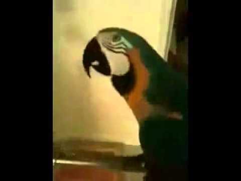 WTF Vogel