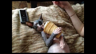 Интересное про кошек август 2014 ( New about cats - August 2014 )