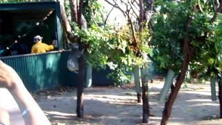 先日オーストラリアでコアラを見てきました。 友人たちがコアラと一緒に...