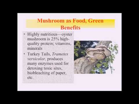 Medicinal Mushrooms, Restorative Medicine Conference, 2016