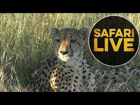safariLIVE - Sunset Safari - May, 21. 2018