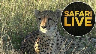 safariLIVE - Sunset Safari - May, 21. 2018 thumbnail