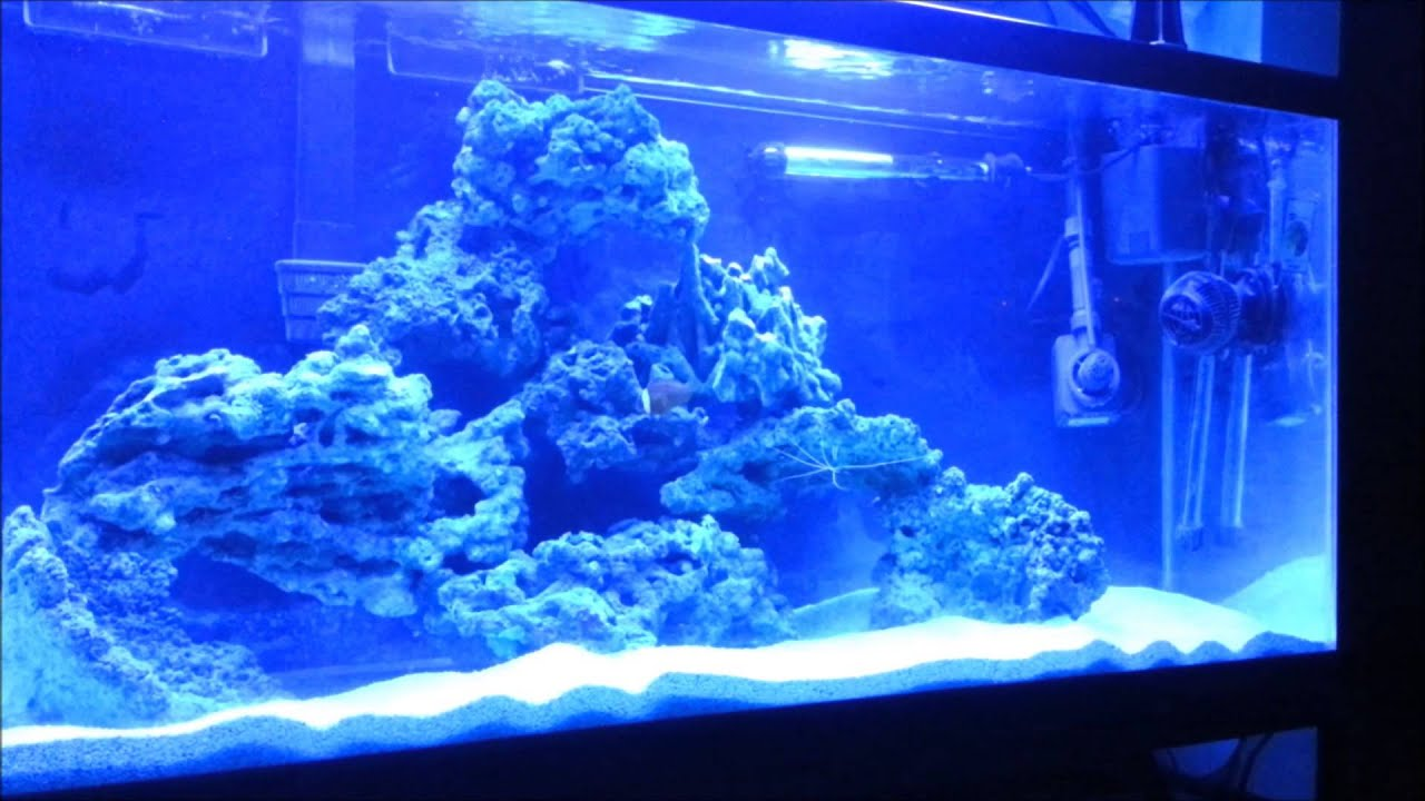 Freshwater to Saltwater Conversion Part 5 Final