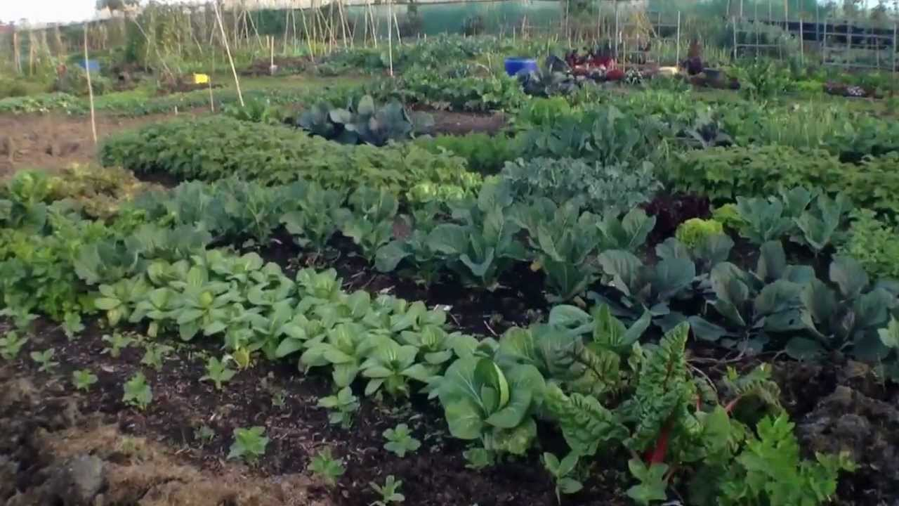 Kitchen Garden Chinese Migrant Kitchen Garden Youtube