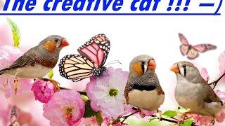 Зебровые Амадины! Уход!  гнездо и корм!!!  care for finches