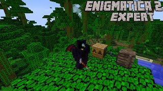 Pushing Into Forestry and Starting into Bees : Enigmatica 2 Expert Lp Ep #72 Minecraft 1.12