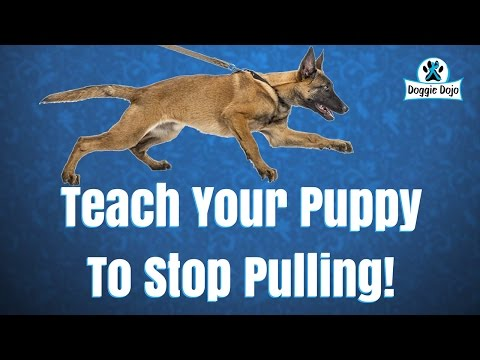 Teach Walking Off Leash To Your Puppy Around Distractions