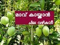 HOW TO INCREASE MANGO PRODUCTION FAST