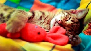 Подборка Спящих Кошек - Смешные и Милые Кошки - Смешные Кошки - Выпуск #1