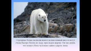 Арктика 4 класс