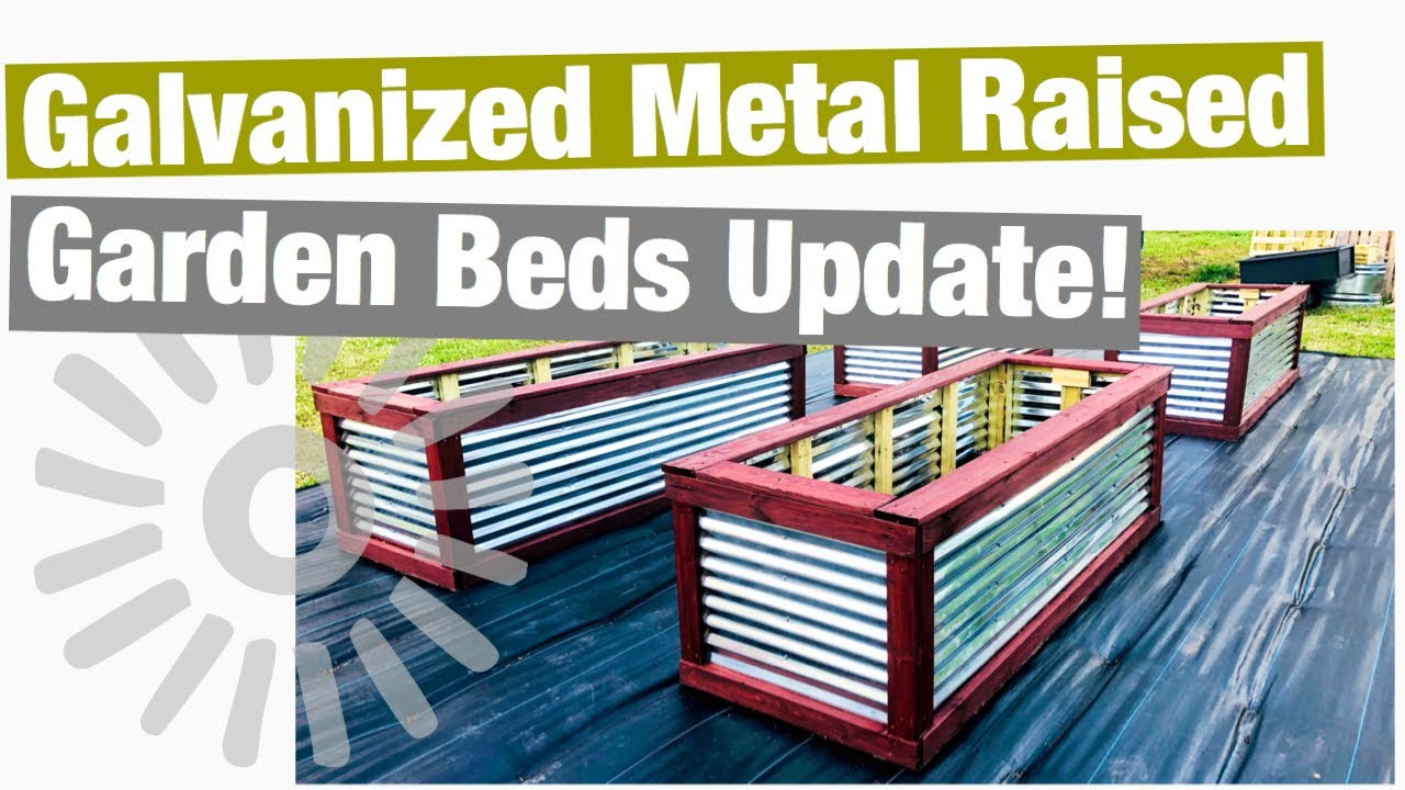 Galvanized Metal Raised Garden Beds Update Youtube