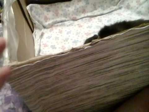 котята за бесплатно (отдам в добрые руки )