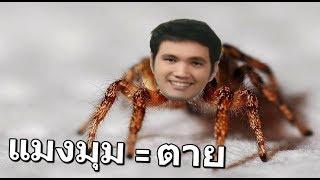 หน่วย-zeed-ล่าแมลงมุมยักษ์