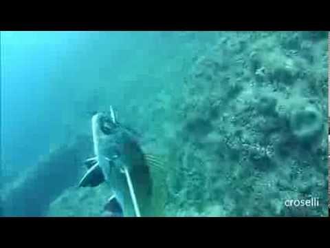 Pesca sub: Corvina - Podvodni ribolov: kaval