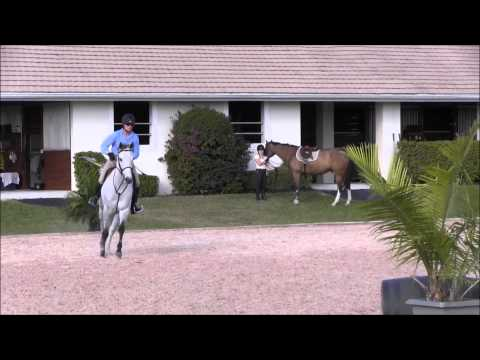 Grey horse for sale-I can fly